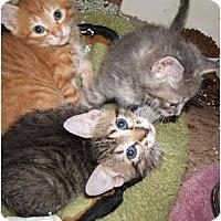 Adopt A Pet :: Fiction - Dallas, TX
