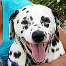Adopt A Pet :: Cindy