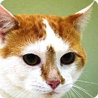 Adopt A Pet :: Julius - New York, NY