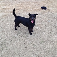 Adopt A Pet :: POPPY - Tunica, MS