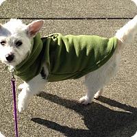 Adopt A Pet :: Jessie - North Bend, WA