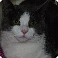 Adopt A Pet :: Penney - Stafford, VA