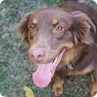 Adopt A Pet :: Joe - Carlisle, TN