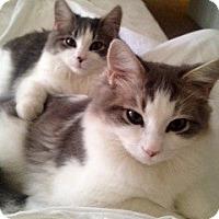 Adopt A Pet :: Handsome & Dennis - Novato, CA