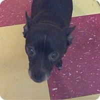 Adopt A Pet :: Tina - Tavares, FL