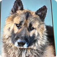 Adopt A Pet :: ZOLI VON ZURICH - Los Angeles, CA