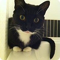 Adopt A Pet :: Meera - Surrey, BC