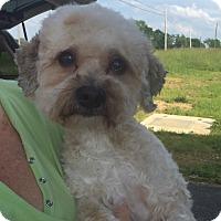 Adopt A Pet :: Buddy - LEXINGTON, KY