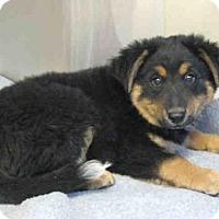 Adopt A Pet :: *HUNTER - Norco, CA