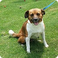 Adopt A Pet :: Princess - Lawrenceville, GA