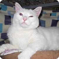 Adopt A Pet :: Tommy - Agoura Hills, CA