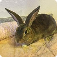 Adopt A Pet :: Sprout - Bonita, CA