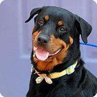 Adopt A Pet :: Luna - Pottsville, PA