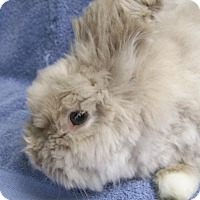 Adopt A Pet :: Teddi - Harrisburg, PA