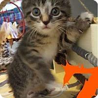 Adopt A Pet :: Zori - Evans, WV