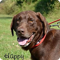 Adopt A Pet :: Happy-approved application - DuQuoin, IL