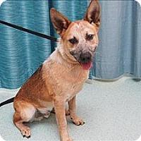 Adopt A Pet :: Bismark - Portland, OR