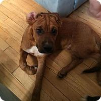 Adopt A Pet :: Tim - Saskatoon, SK