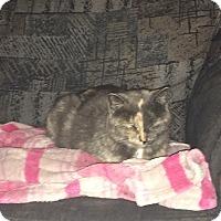 Adopt A Pet :: Gaya - Montreal, QC