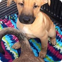 Adopt A Pet :: Cooper - san diego, CA