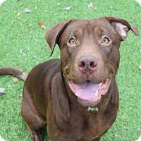 Adopt A Pet :: ZED - Atlanta, GA
