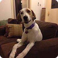 Adopt A Pet :: Maggie (th) - Tampa, FL
