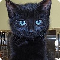 Adopt A Pet :: Joy - Grants Pass, OR
