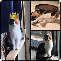 Adopt A Pet :: Sandra - MCLEAN, VA