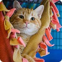 Adopt A Pet :: Adam - Pittsburg, KS