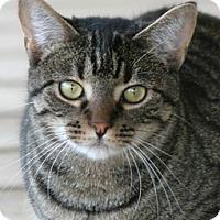 Adopt A Pet :: Alana - North Fort Myers, FL