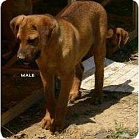 Adopt A Pet :: Taft - New Boston, NH