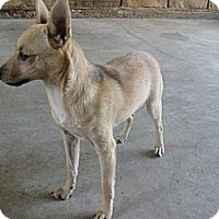 Adopt A Pet :: Yahtzee - Stilwell, OK