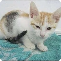 Adopt A Pet :: Kiki - The Colony, TX