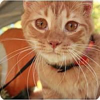 Adopt A Pet :: Hal - Summerville, SC