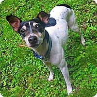Adopt A Pet :: Beyley - Boise, ID