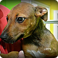 Adopt A Pet :: Larry - Vancleave, MS