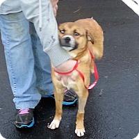 Adopt A Pet :: Scout - Huntsville, TN