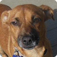 Adopt A Pet :: Murphy - MINNEAPOLIS, KS