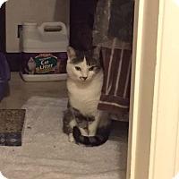 Adopt A Pet :: elsie - Laguna Woods, CA