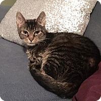 Adopt A Pet :: Janine - Amelia, OH