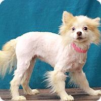 Adopt A Pet :: Lancer - Waldorf, MD