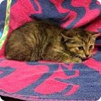Adopt A Pet :: Sailor - Janesville, WI