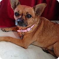 Adopt A Pet :: Ruby - San Diego, CA