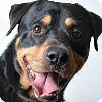 Adopt A Pet :: THOR - Ukiah, CA