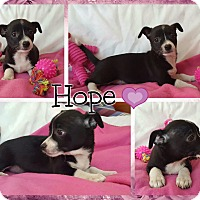 Adopt A Pet :: Hope - Spring Valley, NY