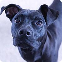 Adopt A Pet :: Zues - Grand Rapids, MI