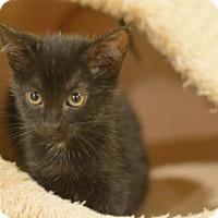 Adopt A Pet :: Coco - Madison, NJ