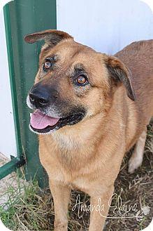 Shepherd (Unknown Type) Mix Dog for adoption in Pilot Point, Texas - EMMETT