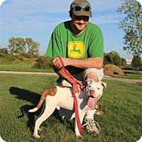 Adopt A Pet :: Kango - Elyria, OH