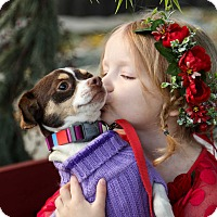 Adopt A Pet :: Sweetie Pie - Auburn, CA